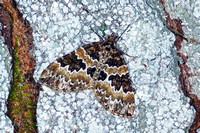 Broken barred carpet