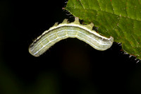 Hebrew character caterpillar